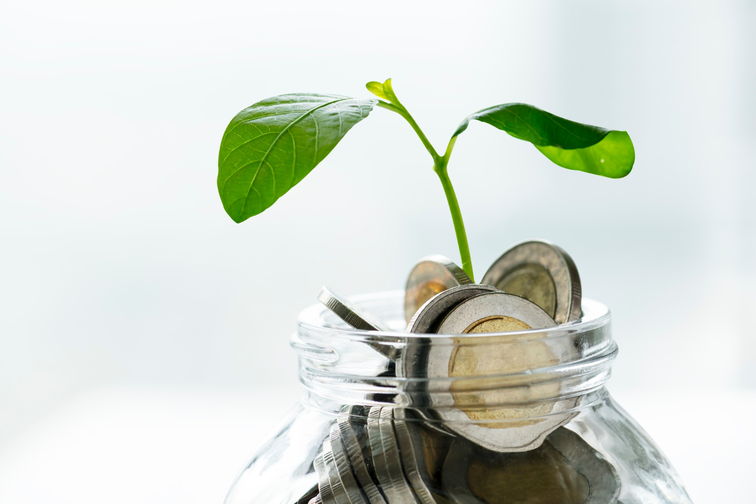 green-economy-jar-with-money-growing-plant